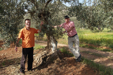 Calle and Henrik were the first adopters to travel to Ermioni just to see their tree, in April 2009.